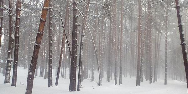 Как восстановить ресурсное состояние зимой
